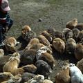 うわぁっ兎!うさぎ!ウサギ!@広島県の大久野島の兎たち
