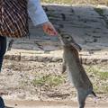 写真: 手が可愛い@広島県大久野島の兎たち