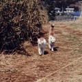 猫と散歩した想い出2