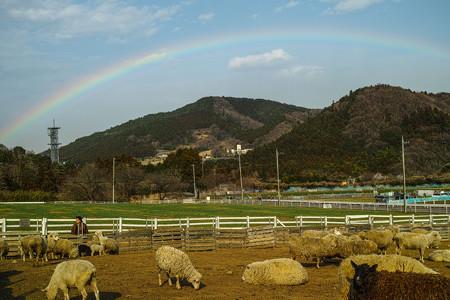 昨日虹が出てました