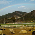 Photos: 羊さん!空、空見てご覧!ってばあ!