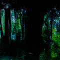 深き緑の反映