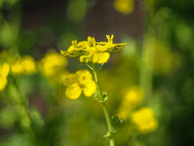 Photos: 緑黄色暈けワールド