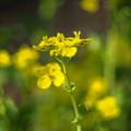 緑黄色暈けワールド