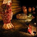 二条城の夜桜の会場にて