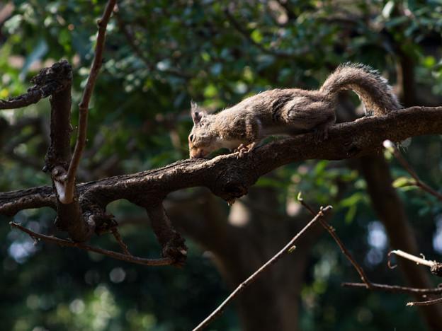優しい陽光を浴びて栗鼠も可愛く見える
