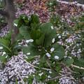 Photos: 花嵐の跡