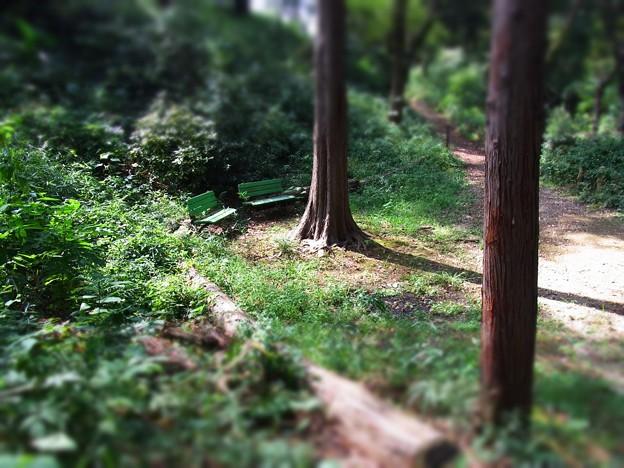 木陰のベンチ