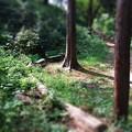 Photos: 木陰のベンチ