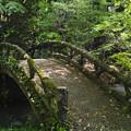 京都府立植物園の中の橋