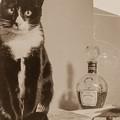 猫 ブランデー そしてなぜか鎌倉大仏、、