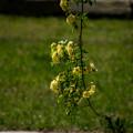 Photos: 花の首飾り