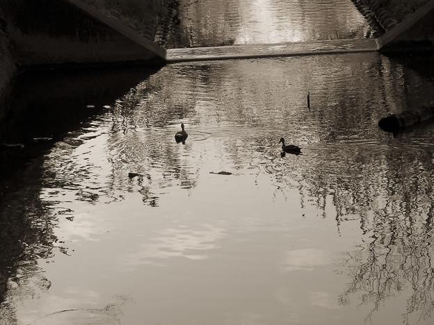 夕暮れの公園の池で