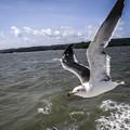 Photos: 海は広いでしょ
