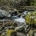 渓流にて1