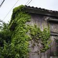 蔦に浸食された家