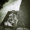 Photos: 埋まってるが、、