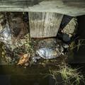 Photos: 亀さんたちがお休み中でした