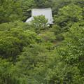 緑に埋もれる屋根