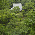 Photos: 緑に埋もれる屋根