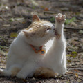 Photos: 春の日差しは猫に優しい