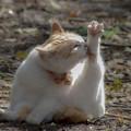 春の日差しは猫に優しい