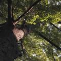 鬼子母神の境内にある大樹