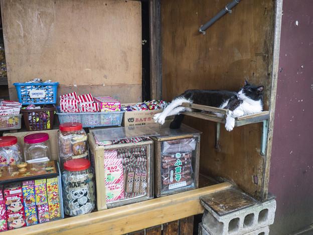 Photos: 番台に横たわる猫(#^.^#)