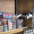 番台に横たわる猫(#^.^#)