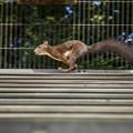 Photos: 栗鼠は微笑みながら走っていました(爆)