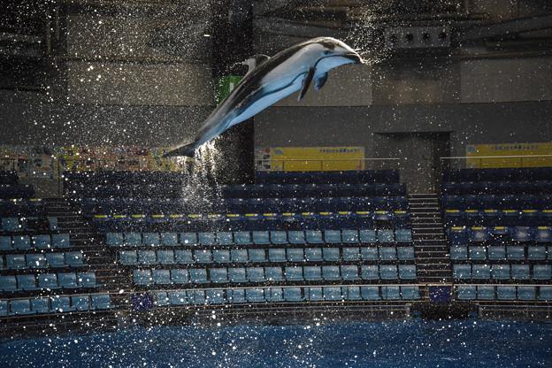 Photos: 光に向かって飛んだ!@EPSON品川アクアスタジアム-10