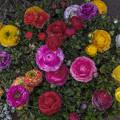最近極彩色がないから春先の花を