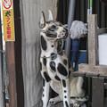 Photos: 狂犬の蓋(爆)