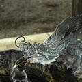 Photos: Dragon様