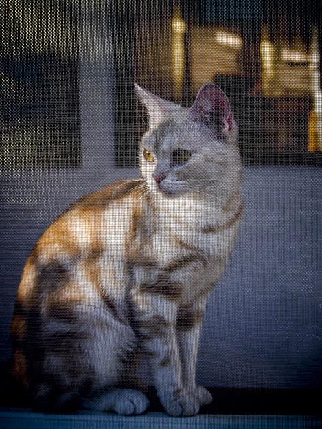 Photos: キャンバスに描かれた猫の様だ(爆)