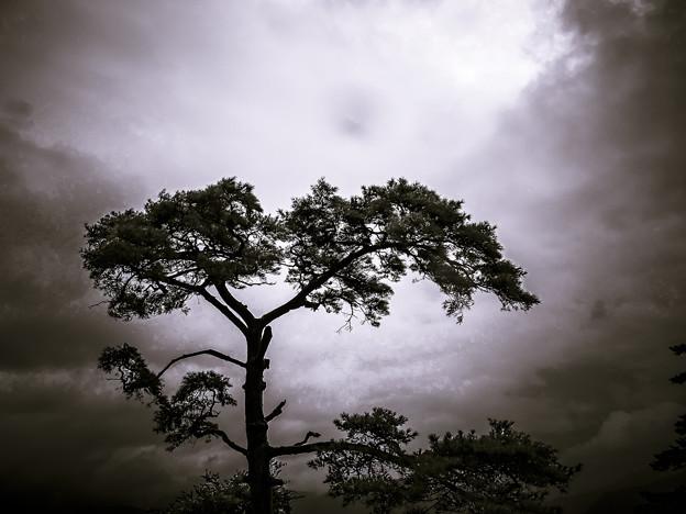 Photos: 神々が降臨した場所に生える樹