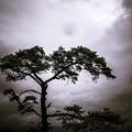 神々が降臨した場所に生える樹