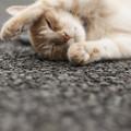 猫のしぇ~、、、のピントがあったやつ