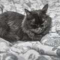 Photos: 黒猫だからカラーで撮ってもなあバキッ!!☆/(x_x)
