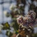 Photos: 氷の花
