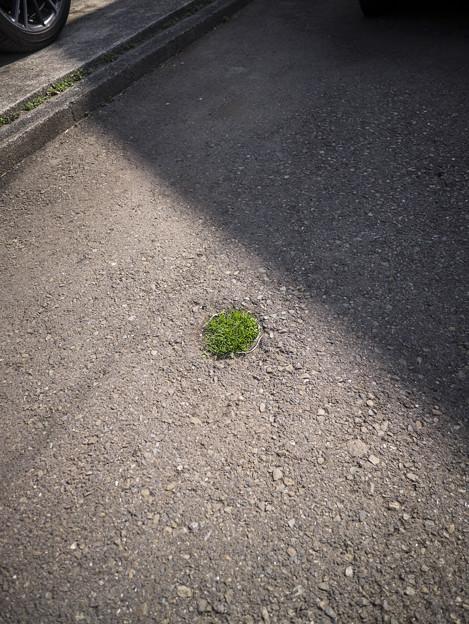 根性の春が来た。