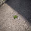 Photos: 根性の春が来た。