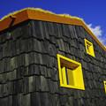 Photos: 黒、黄色、青!