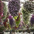 花の好きな人にはたまらない掛川花鳥園の「鳥の居ない場所」