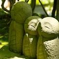 Photos: 鎌倉長谷寺05「新緑に包まれて」