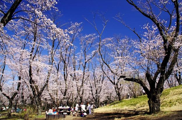 2014桜64「ソメイヨシノ」