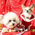 Photos: メリークリスマス2012