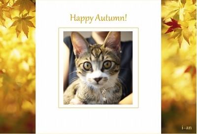 gold autumn-sample