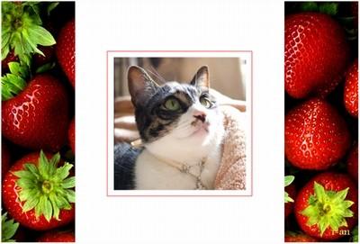 spring-strawberry-sample
