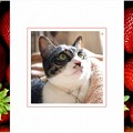 Photos: spring-strawberry-sample